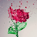 Splash Red Rose LWP icon
