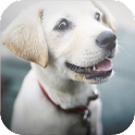 Cute Dogs Wallpapers icon