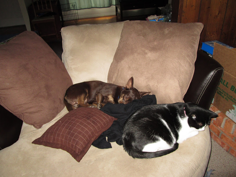 Photo: Is it weird to have a dog smaller than our cat?