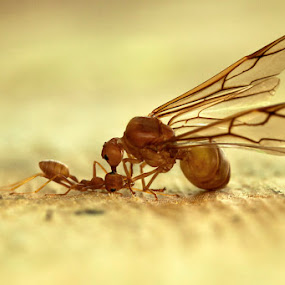 Smack Down by Andi Halil - Animals Insects & Spiders ( nature, wildlife )