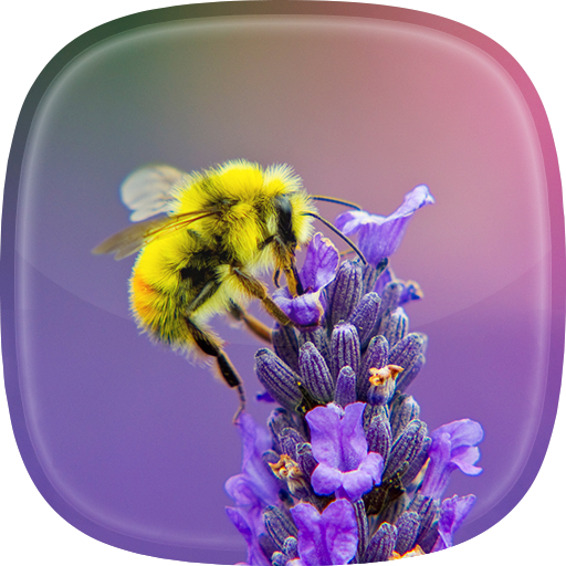 Bee Live Wallpaper 🐝 Cute Moving Background Icon