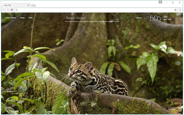 Forest, Trees, Wood, Jungle WildLife Wallpapers New Tab Theme
