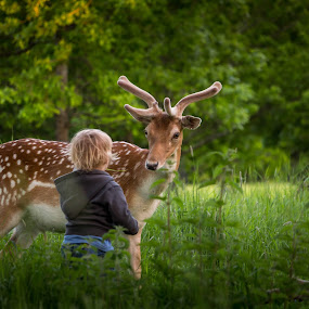 Eye to eye by Adrian Ioan Ciulea - Animals Other Mammals ( child, park, cute, eyes, deer,  )
