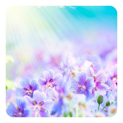 夏季花卉动态壁纸 個人化 App LOGO-APP開箱王