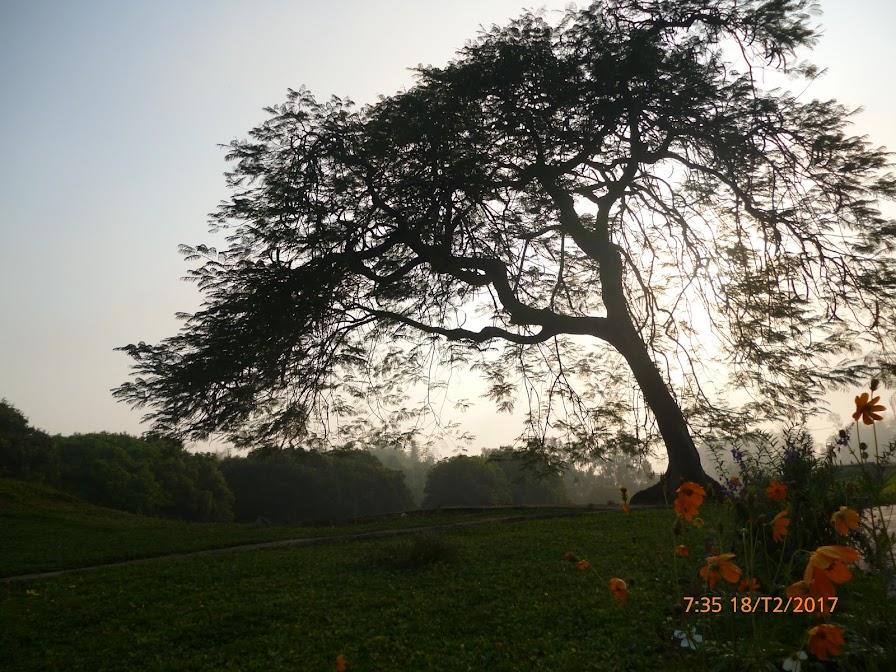 cây che và hoa trên mộ 4 liệt sỹ trên đỉnh đồi A1