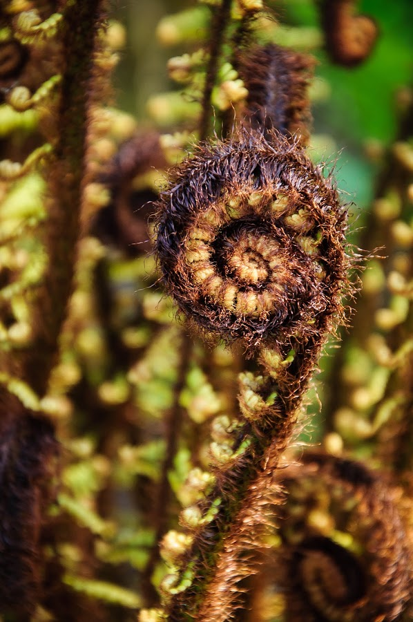 by Anna Klobuch - Nature Up Close Other plants