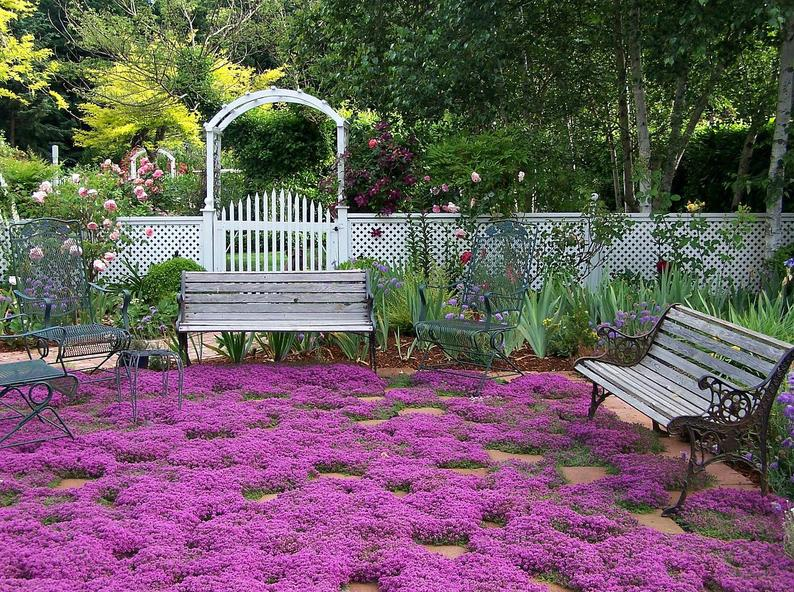 A garden path lined with green grass, and filled in with Red Thyme