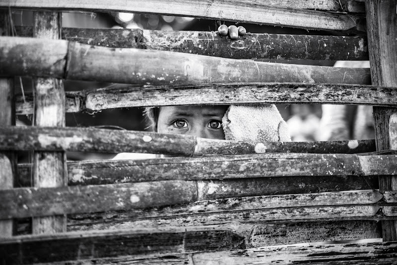 Shy eyes behind the fence di Marco Tagliarino