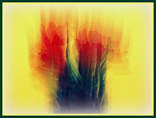 Tulipani in vaso su sfondo giallo di Furlissima
