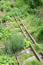 Photo: The plants will soon cover up the rails.
