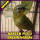 Master Pleci Gacor Ngalas Download for PC Windows 10/8/7