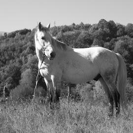 Кон by Georgi Kolev - Black & White Animals ( хълм., кон., трева., ден., светлина., дървета. )