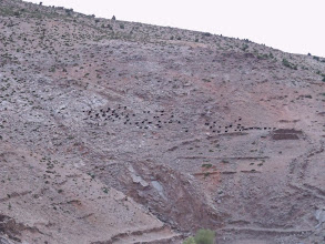 Photo: Goats on the hillside.