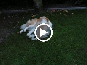 Video: Ganim en pup Hestia samen spelen