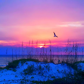 Sunset Dune by Ty Shults - Landscapes Waterscapes ( water, sand, peaceful, purple, beautiful, dune, horizon, ocean, beach, bird, tranquil, sky, blue, fly, sunset, tide, wave, pink, high, low, walk, barefoot,  )