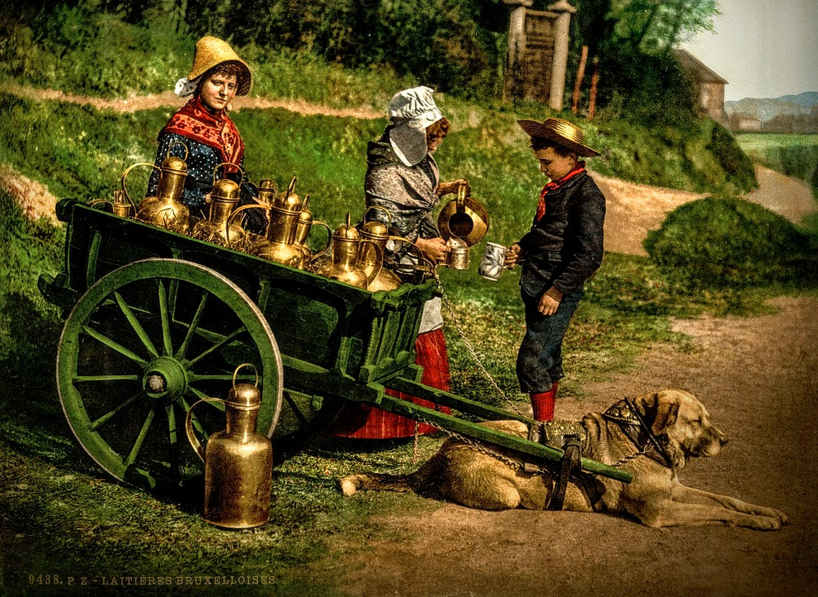 Belgian milk peddlers with a dogcart, c. 1890–1900