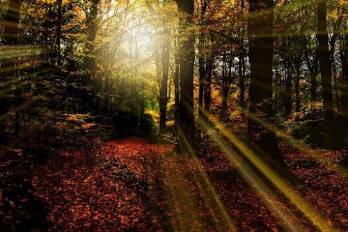 A Woodland Sunrise by Mandy Hedley - Landscapes Forests ( sunrays, trees, forest, woodland, sunrise,  )
