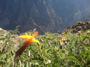 Photo: Die Colca-Schlucht; zweittiefste nach dem Grand Canyon