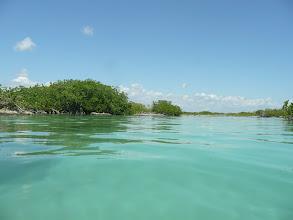 Photo: Mangroven