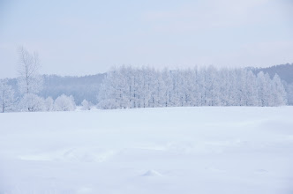 Photo: 北竜町の彩どり・如月の四