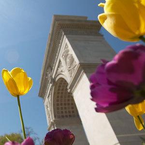 Washington Arch with Tulips.jpg