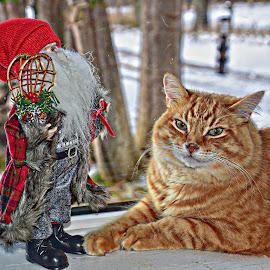 Mr. Pumpkin & Santa  by Debbie Johnson MacArthur - Animals - Cats Portraits