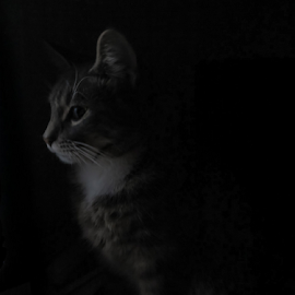 My Kitty Cat by Clive Wright - Animals - Cats Kittens ( kitten, cat, dark, silhouette, stare, low key )