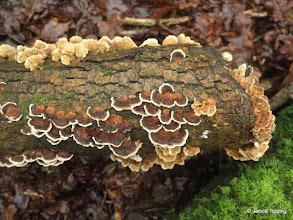 Photo: Some lovely bracket fungi