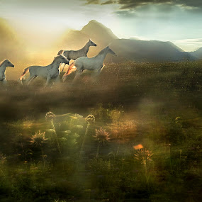 under the peaks by Milan Malovrh - Animals Horses ( lipicanci )