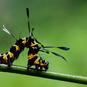 Black and Yellow by Awaludin Aw - Animals Insects & Spiders