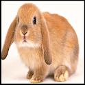 Thỏ cute hình nền icon