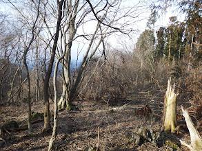 南側は自然林が残る