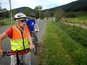 Photo: Marg mooing to cows, Linkwater