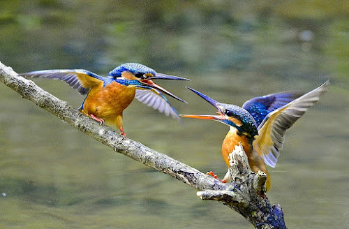 by ZW Young - Animals Birds