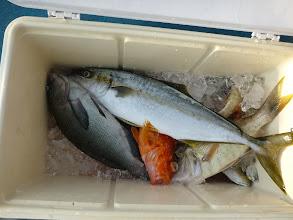 Photo: こちらは戸田さん。 ヒラスは入りました。 泳いでいるイサキ、真鯛・・・の写真、撮り忘れました。 スイマセン。