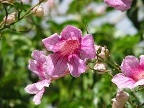 Photo: Petite Fleur ... du jardin