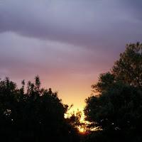Alberi al  tramonto! di