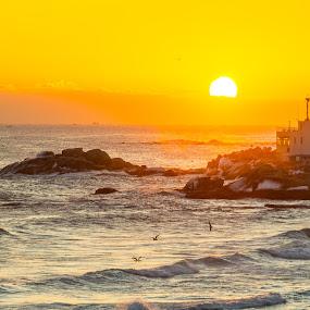 Sunrise over the Sea of Japan by Frederik Schulz - Landscapes Sunsets & Sunrises ( clouds, sokcho, beach, sunrise, birds, korea, sun )
