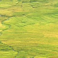 La piana verde di