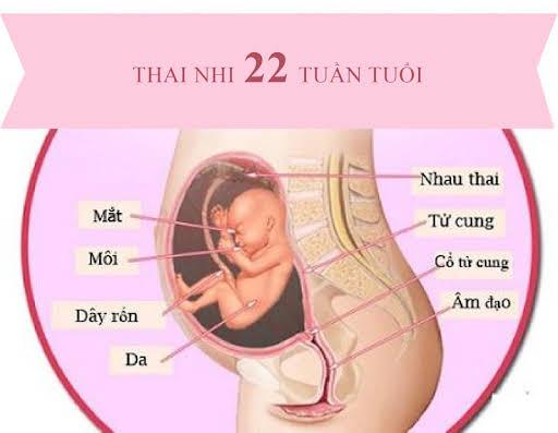 Siêu âm mốc 22 tuần cho biết những thông tin gì quan trọng của thai nhi