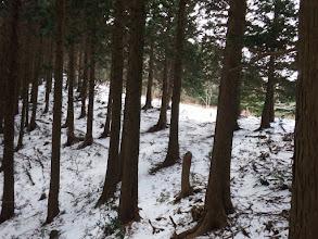 558mピーク手前の伐採地