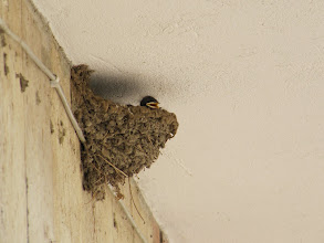 Photo: Day 86 - Baby Swifts