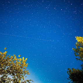 Starry Night by Kyle Kephart - Landscapes Starscapes ( lights, airplane, stars, meteor, trees, forest, night, shooting )