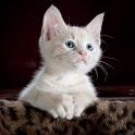 Cute Cats Photos 2021 icon
