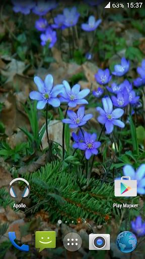 Forest flowers Video Wallpaper