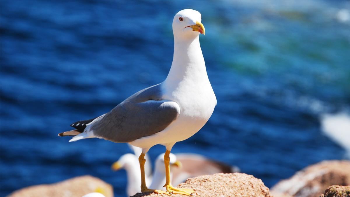 Resultado de imagem para gaivota