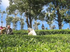 Photo: 7B220946 na plantacji herbaty