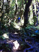 Photo: Empinada subida a Gunung Pangrango.