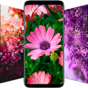 🌺 Flower Wallpapers - Colorful Flowers in HD & 4K icon