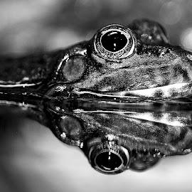 Reflet by Gérard CHATENET - Black & White Animals